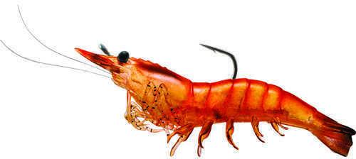 LIVETARGET Lures / Koppers Fishing and Tackle Corp Rigged Shrimp Soft Plastic Pink Shrimp 1/0 Md: SSF75Sk915