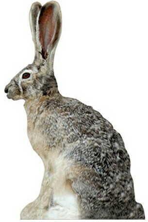 Extreme Dimension Wildlife Phantom Decoy Jack Rabbit ED-PD-513