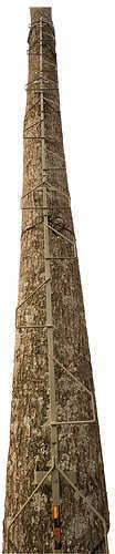 """Summit Treestands Climbing Stick 22"""" Swiftree DTS Md: SU82051"""