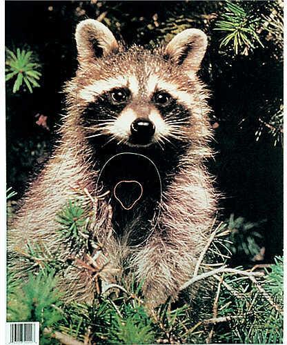 Martin Archery Inc. MARTIN ARCHERY INC Martin Paper Targets Raccoon 11611