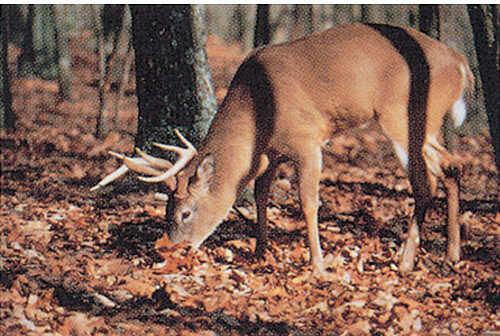 Delta Industries Inc. DELTA INDUSTRIES INC Delta Tru-Life Eastern Series Large Game - Deer Finding 70505