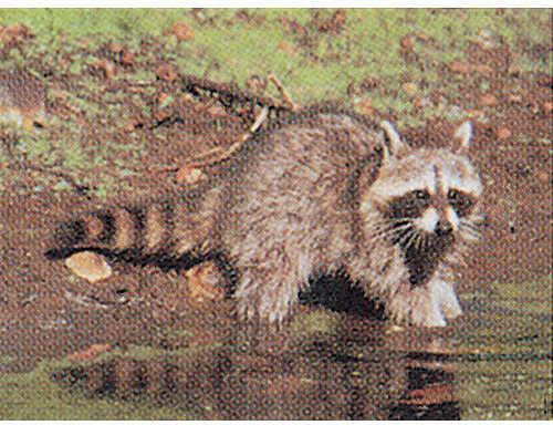 Delta Industries Inc. DELTA INDUSTRIES INC Delta Tru-Life Eastern Series Small Game - Raccoon 70530