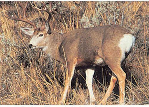 Delta Industries Inc. DELTA INDUSTRIES INC Delta Tru-Life Western Series Large Game - Mule Deer 70550