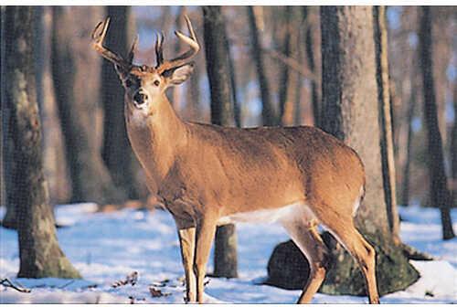 Delta Industries Inc. DELTA INDUSTRIES INC Delta Tru-Life Big 4 Deer Target - Deer Snow 70596
