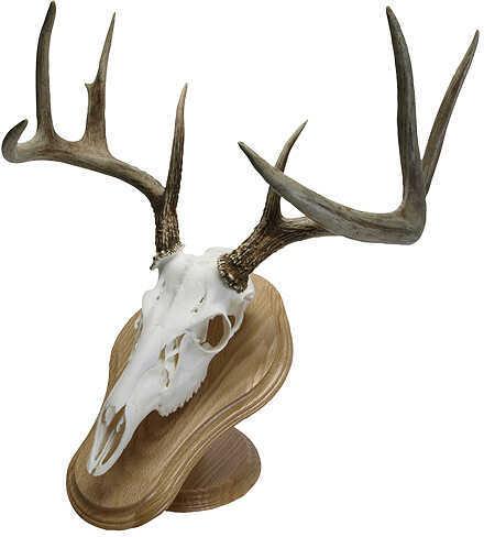 Walnut Hollow Deluxe Euro Skull Display Kit Oak 29635