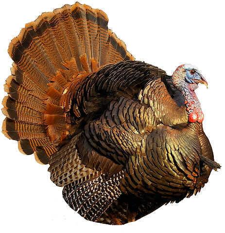 "Montana Decoy Montana Punk Jake Decoy 31""x22"" Turkey 57626"