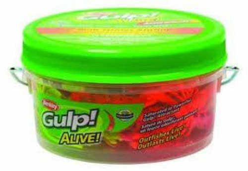 Pure Fishing / Jarden Berkley Gulp Alive Ghost Shrmp Pint 3in Assorted Colors GAPGSHR3-AST1