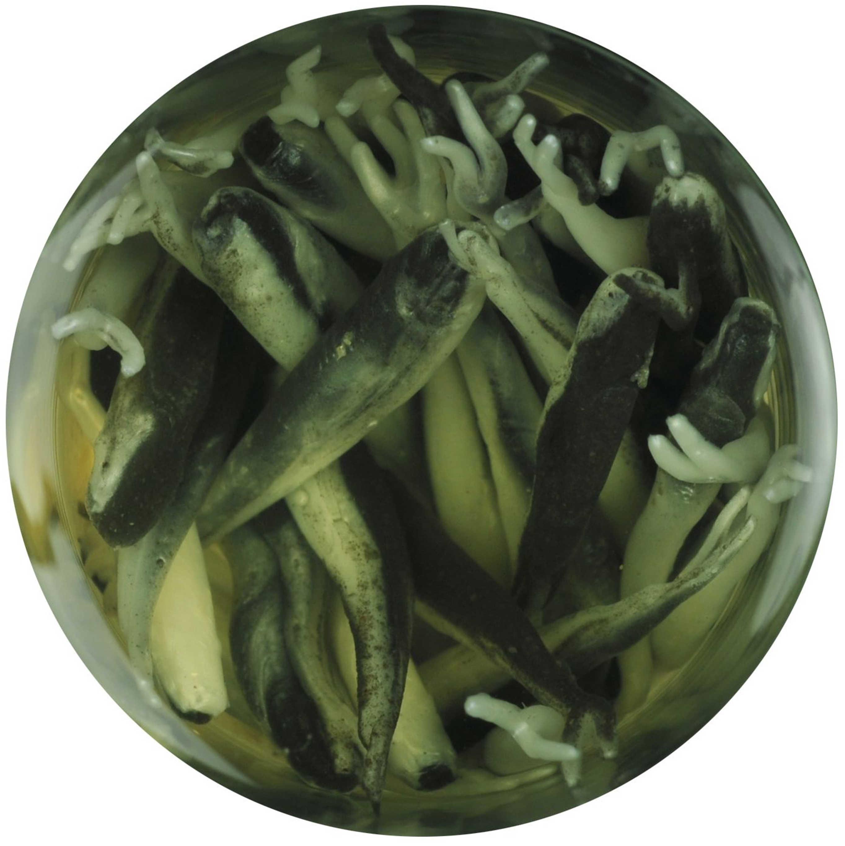 Berkley Gulp! Alive Minnow 1in 2.1 Oz Jar Black Shad Md#: GAJMI1-BS